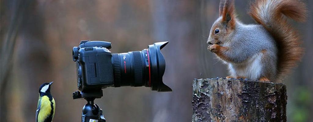 چگونه عکاس حرفه ای شویم؟